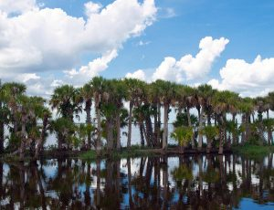 Stick Marsh Fellsmere Florida